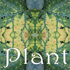 Plant_kafel
