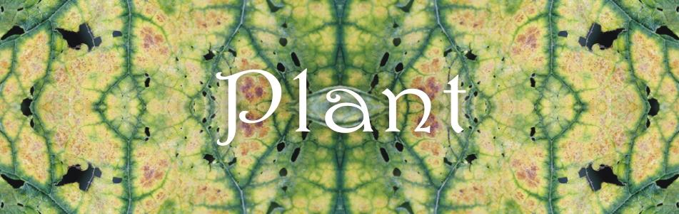 Plant_kafel_D